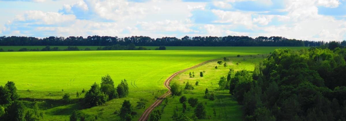 Поле над Воргольским лесом по пути в Рябинки