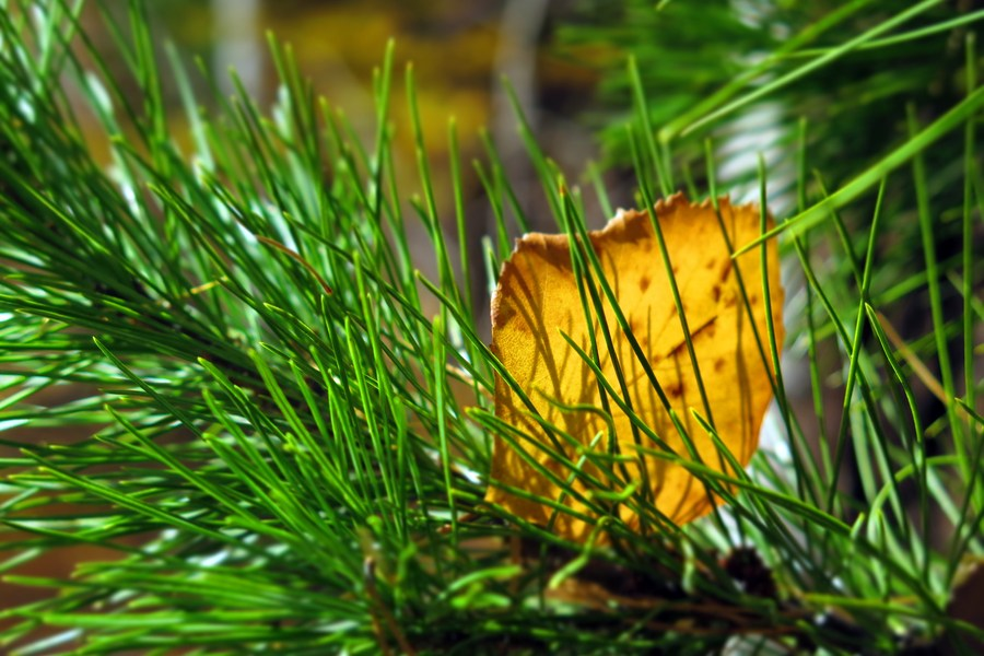 Осень в лесу на Ворголе
